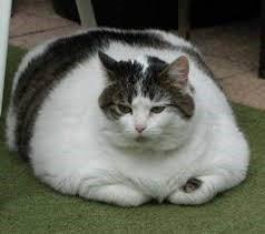 old cat kidney failure