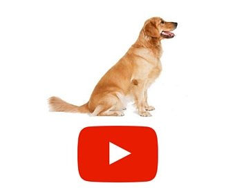 canine diseases treatment