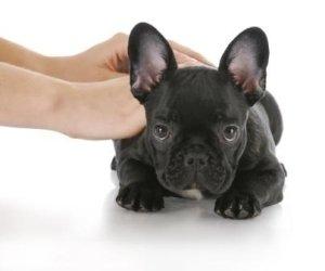 chiropractor holding black dog