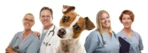 dog together with smiling veterinarians