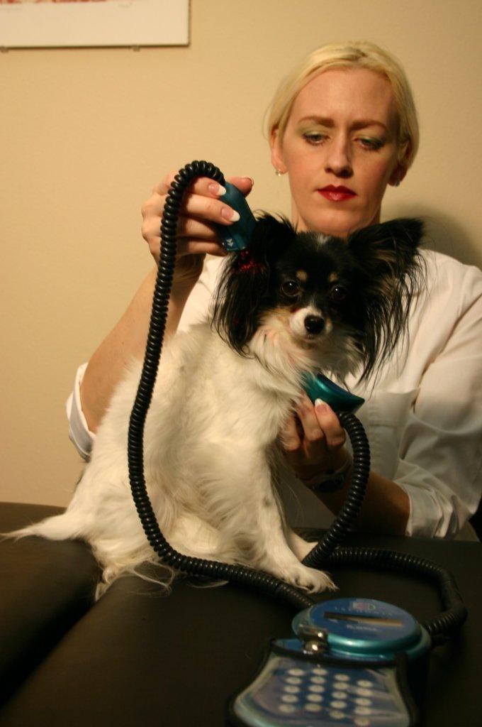 List Equine Chiropractors Near Me Vom Veterinary