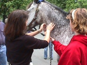 equine chiropractic adjustment in action